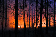 Forest is on fire Royalty Free Stock Image