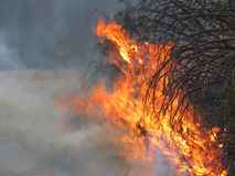 Forest fire or controlled burn background with smoke. Flames and smoke on twigs and branches, smoky background image for forest fires, public education, fire stock images