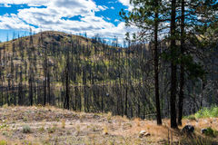 Forest Fire Damage Stock Photography