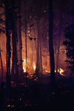 Forest Fire Damage. Forest fire at dusk detail Stock Image