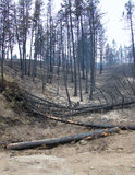 Forest fire damage Royalty Free Stock Photos