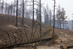 Forest fire damage Stock Images