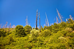 Forest with fire damaged trees Stock Images