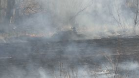 Forest after the fire in the daytime. Thick smoke after a wildfire over large area of nature. Trees in smoke and burnt