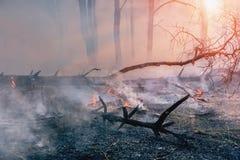 Forest Fire de gevallen boom wordt gebrand aan de grond heel wat rook wanneer wildfire stock afbeeldingen