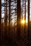 After a forest fire. A forest stands still after a forest fire, shot at sunset for a dramatic look stock images