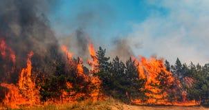Forest Fire det stupade trädet bränns till jordningen mycket rök när löpelden royaltyfri fotografi