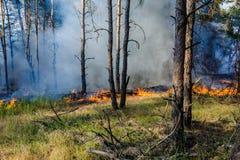 Forest Fire det stupade trädet bränns till jordningen mycket rök när löpelden arkivbilder