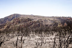 Forest fire devastation Royalty Free Stock Images