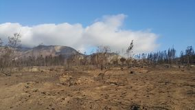 Forest Fire. Devastation,mountain background Stock Photography