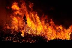 Forest Fire dicht bij een huis stock afbeeldingen