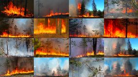 Forest fire disaster for environment royalty free stock image