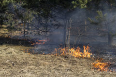 Forest fire Royalty Free Stock Photos