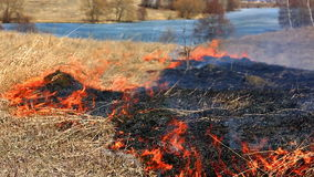 Forest fire: dry grass burning to ashes stock footage