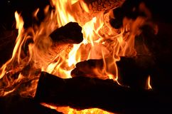 Forest fire. Environmental disaster. fire and flames Stock Photography