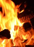 Forest fire. Environmental disaster. fire and flames Stock Image