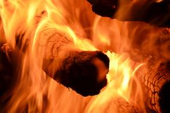 Forest fire. Environmental disaster. fire and flames Royalty Free Stock Photo