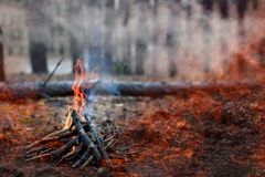 Forest fire. fallen tree is burned to the ground a lot of smoke when vildfire. Space for text royalty free stock photo