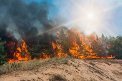Forest fire. fallen tree is burned to the ground a lot of smoke when wildfire.  stock photography