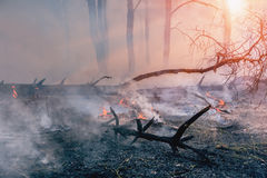 Forest fire. fallen tree is burned to the ground a lot of smoke when wildfire.  stock images