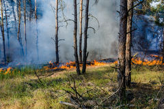 Forest fire. fallen tree is burned to the ground a lot of smoke when Wildfire stock images