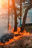 Forest fire. fallen tree is burned to the ground a lot of smoke when wildfire.  royalty free stock images
