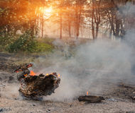 Forest fire. fallen tree is burned to the ground a lot of smoke when wildfire.  royalty free stock photos