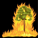 Forest Fire, fire in forest landscape damage, nature ecology disaster, hot burning trees, danger forest fire flame with. Smoke, blaze wood background vector Stock Photo