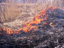 Forest fire flames spread over dry grass danger royalty free stock images