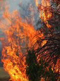 Forest fire flames in vertical photograph Royalty Free Stock Images
