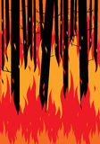 Fire forest. Forest fire background Royalty Free Stock Image