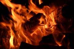 Forest fire. Environmental disaster. fire and flames Royalty Free Stock Photography