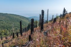 After Forest Fire. Vitosha Bulgaria national park stock photo