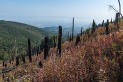 After Forest Fire. Vitosha Bulgaria national park royalty free stock image