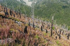 After Forest Fire. Vitosha Bulgaria national park royalty free stock photo