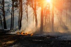 Forest Fire Gebrande bomen na bosbranden en veel rook stock afbeeldingen