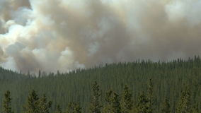 Forest fire with heavy smoke. Smoke from a forest fire in the Canadian Rockies stock footage