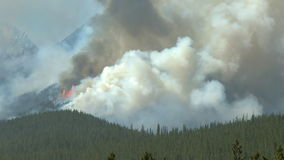 Forest fire with heavy smoke. Smoke from a forest fire in the Canadian Rockies stock video footage