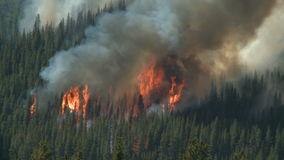 Forest fire with heavy smoke. Forest wildfire on the slopes of a forested mountain in the Canadian Rockies stock video