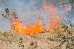 Forest Fire India Stockfoto