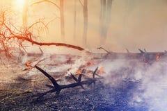 Forest Fire l'arbre tombé est brûlé à la terre beaucoup de fumée quand le feu de forêt photo libre de droits