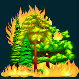 Forest Fire. Forest Fire, fire in forest landscape damage, nature ecology disaster, hot burning trees, danger forest fire flame with smoke, blaze wood Royalty Free Stock Images