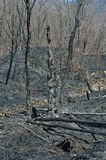 After forest fire 14 Royalty Free Stock Photos
