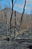 After forest fire 10 Royalty Free Stock Photos