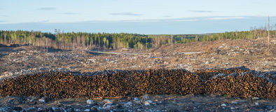 Forest after fire Royalty Free Stock Photography