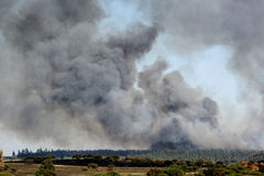 Forest fire Stock Images