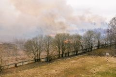 Forest fire Lit dry grass and trees. Approaching fire to residential buildings. Thick smoke in the forest stock images