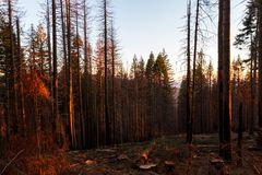 After a forest fire. Logging operation after a large forest fire burned a large section of forest in the Red Blanket Mountain area of southern Oregon royalty free stock image