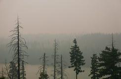 Forest Fire met grijze rook en bomen Stock Fotografie