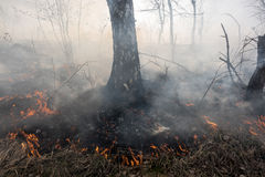 Forest fire. Fire in the mixed wood forest Royalty Free Stock Photo